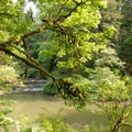 Lacamas Creek.- Lacamas Creek Park