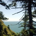 View out toward the Pacific near the Devil's Cauldron overlook.- Oswald West State Park
