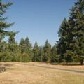 Picnic spots in the Riverbend day-use area.- Milo McIver State Park