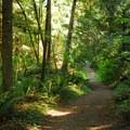 Hiking trail near the fish hatchery.- Milo McIver State Park
