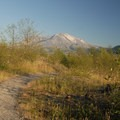 View of Mount St. Helens (8,366').- Hummocks Trail