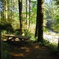 Dougan Falls' designated picnic area.- Dougan Creek Campground