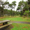 View of the park's designated picnic area.- Yaquina Bay State Recreation Site
