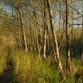 - Hummocks Trail