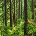 The park's Rim Trail.- Silver Falls State Park