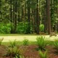Picnic area near South Falls Lodge.- Silver Falls State Park