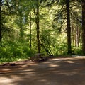 Typical campsite at the main campground.- Silver Falls State Park