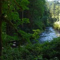 View of Silver Creek along the Canyon Trail.- Silver Falls State Park