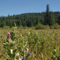 Meadow near the Old Ranch.- Silver Falls State Park