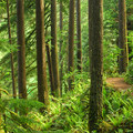 The park's Rim Trail.- Silver Falls State Park Campground