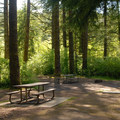 Typical campsite.- Silver Falls State Park Campground