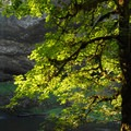South Falls.- Silver Falls State Park Campground
