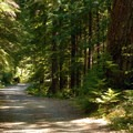 The beginning of the trail on NF-2209, which leads to Jawbone Flat.  Only open to local residents.- Opal Creek Hiking Trail