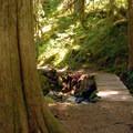 - Opal Creek Hiking Trail