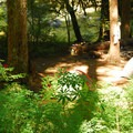 Backcountry campsites near Slide Falls.- Opal Creek Hiking Trail
