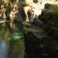 Opal Pool (great cliff jumping spot).- Opal Creek Hiking Trail