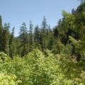 View of the wilderness from the Opal Creek Trail.- Opal Creek Wilderness