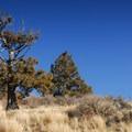 - Pilot Butte Summit Trail