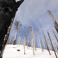 Looking at a burnt forest from near the summit.- Black Butte, East Approach
