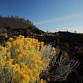 Gray rabbitbrush (Ericameria nauseosa) and Lava Butte (5,023').- Newberry National Volcanic Monument
