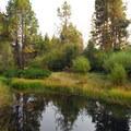 Pond near Aspen Hall.- Shevlin Park
