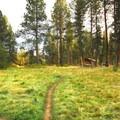 Meadow and picnic area near the park's entrance.- Shevlin Park