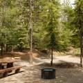 Typical campsite.- Timothy Lake, Pine Point Campground