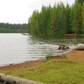 Timothy Lake's shore from the Gone Creek Campground.- Timothy Lake, Gone Creek Campground