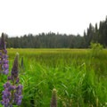 Meadow adjacent to the campground and Little Crater Lake.- Little Crater Lake Campground