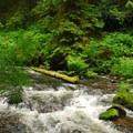 View upstream of Camp Creek.- Camp Creek Campground