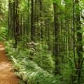 - Salmon River, West Canyon Trail