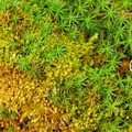The ground cover throughout the campground is made up primarily of a garden of different mosses.- McNeil Campground