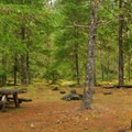 One of the campground's better campsites.- McNeil Campground