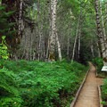 Interpretive trail.- Lost Creek Campground