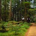 Interpretive trail.- Lost Creek Campground