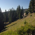 View from along the Timberline/Pacific Crest Trail.- Paradise Park via Timberline Lodge
