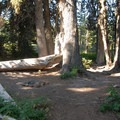 One of many backcountry campsites throughout the meadows.- Elk Meadows