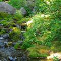 Tilly Jane Creek.- Tilly Jane Campground