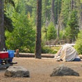 Campsite along the East Fork of the Hood River.- Nottingham Campground