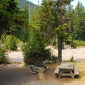 Campsite along East Fork of the Hood River.- Nottingham Campground