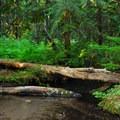 Still Creek.- Still Creek Campground
