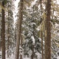 - Twin Lakes, Barlow Pass Sno-Park