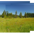 Wildflower meadow near Little Crater Lake.- Little Crater Lake