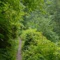 Latourell Falls Trail.- Latourell Falls Hike
