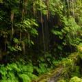 - Wahkeena Falls/Multnomah Falls Loop Hike