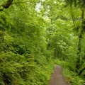 Return trail to Wahkeena Falls.- Wahkeena Falls/Multnomah Falls Loop Hike