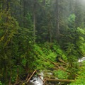 Old-growth forest and cascades along Wahkeena Creek.- Wahkeena Falls/Multnomah Falls Loop Hike