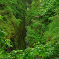 View looking down into Oneonta Gorge and out toward the Columbia River Gorge.- Horsetail, Ponytail + Triple Falls Hike