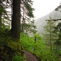Trail up to Triple Falls.- Horsetail, Ponytail + Triple Falls Hike