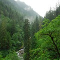 Impressive old-growth forest along the Eagle Creek canyon.- Eagle Creek Hike to Tunnel Falls